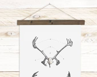 Antler Study Caribou- Watercolor Botanical wall hanging, wood trim art. Scientific Canvas Posters Chart | More Options