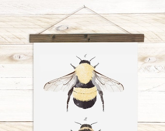 Insect Study - Bee - Watercolor Insect wall hanging, wood trim art. Scientific Canvas Posters Chart | More Options