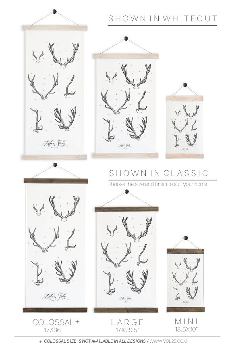 large watercolor antler wall hanging Antler Study wood trim art printed on textured cotton canvas Scientific Posters chart Vol.2 VP201