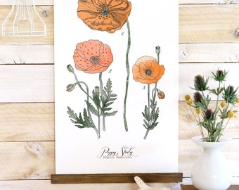 Poppy Study - botanical watercolor wall hanging, wood trim art printed on textured cotton canvas. Vintage Science Poster chart Vol.1
