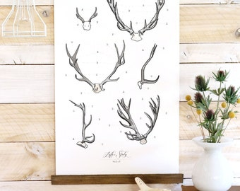 Antler Study - large watercolor antler wall hanging, wood trim art printed on textured cotton canvas. Scientific Posters chart Vol.2 VP201