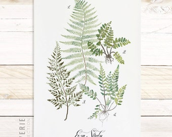 Fern Study - Reverie Collection / Watercolor botanical wall hanging, wood trim art. Scientific Canvas Posters Chart Vol.1 More Options VPR08