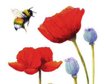 Bumble Bee and Orange Poppies - Seeking Print, Flower, Bee, Nature