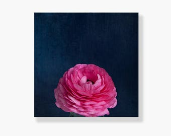 Nature photo canvas gallery wrap, pink ranunculus photo, flower wall art, flower photography, pink, navy blue, canvas wall art - Single Pink