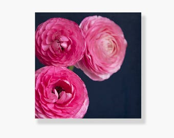 Nature photo canvas, pink ranunculus photo, flower decor, flower canvas gallery wrap, pink, navy blue, shabby chic decor, canvas - Unfurl