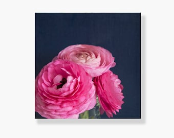 Nature photo canvas gallery wrap, pink ranunculus photo, floral decor, flower wall art, pink, navy blue, shabby chic decor - The Pink Curls