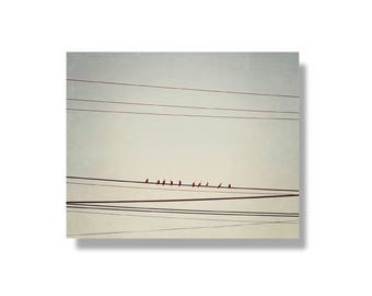 Bird canvas gallery wrap, canvas wall art, nature wall art, geometric wall art, bird decor, bird photography - On the Wire