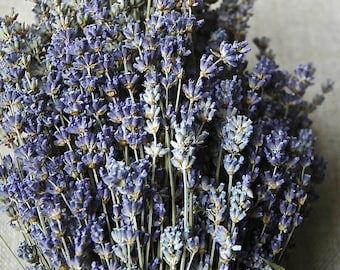 "2,000 STEMS of English Lavender 8-12"" Long"