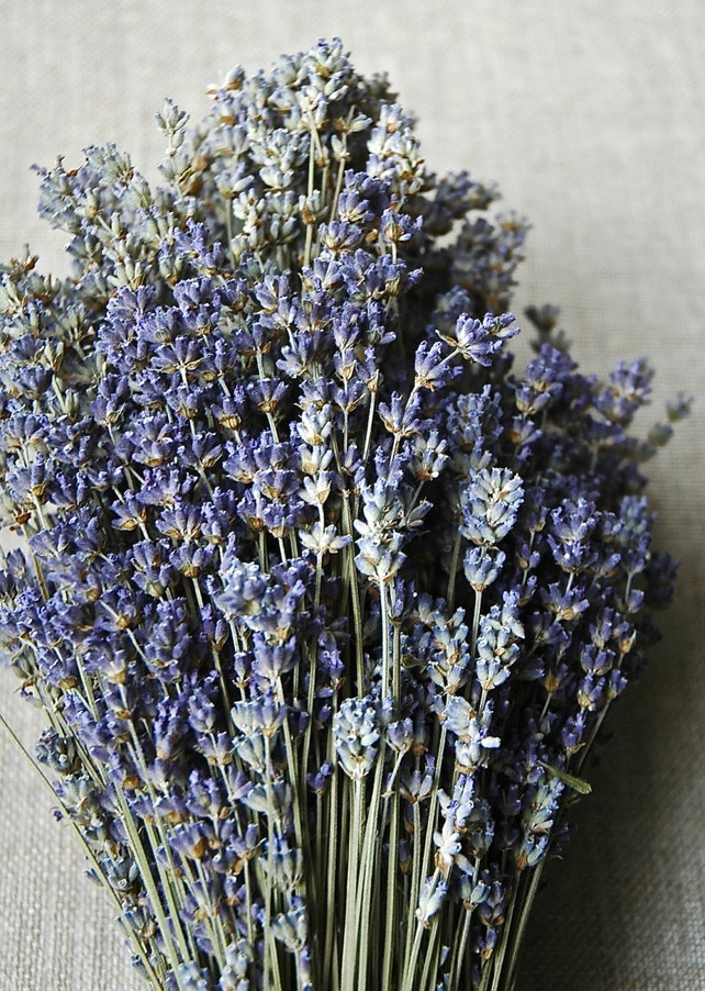 "500 STEMS of English Lavender 8-12"" Long Weddings, Decor, Crafts, Bulk, Bouquets, Bunches"