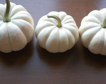 8 REAL White Fall or Winter Wedding Thanksgiving  Casperita Small White Pumpkins for  Table Decor Table Numbers Ships per your event date.