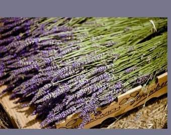 Custom for Kendall 250 Stems of Gros Bleu French Lavender and EXPRESS SHIPPING