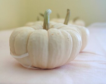 25 Fall Winter Wedding Decor Mini REAL White Pumpkins for Table Decor for late Summer or Fall Weddings Order to Ship for Your Date
