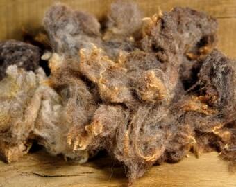Washed Coloured Ryeland Sheep's Fleece from 'Truffle', 100g