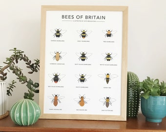 Bee print   Bees of Britain   wildlife illustration   nature poster   bumblebee wall art   honey bee   A4 or A3   bee home decor   bee gift