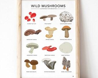 Wild mushrooms illustrated print - wild food print - fungi wall art - edible mushrooms print - kitchen wall gift / foraging home decor gift