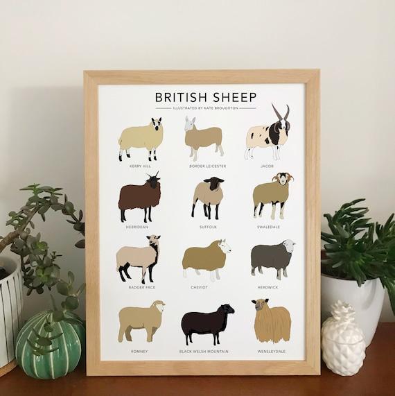 British Sheep print illustrated sheep wall art sheep breeds   Etsy