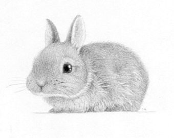 Bunny Rabbit Drawing Art Pencil Black and White Nature Cute