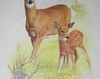Deer Print Severt Andrewson 11249 Scriptural