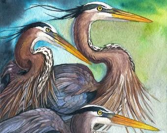 Herons - Great Blue Heron Wildlife Bird Print