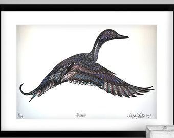 Archival Pintail Limited Edition Giclee Print 11x17