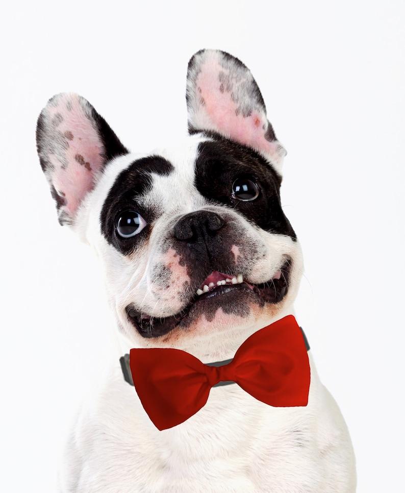 58 single loop Easter bunny ears yorkie bow+ pink Mo/'s USA Dog Bow