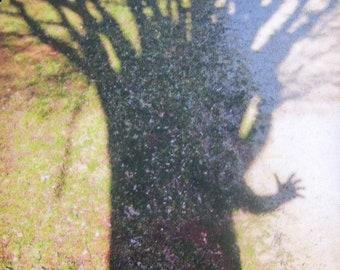 Tree Shadow Photo Magnet