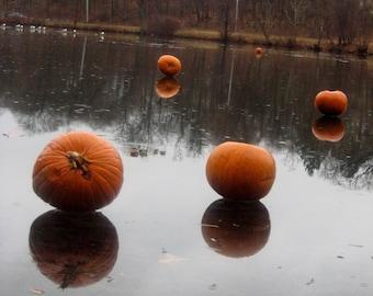 Framed Pumpkin Photo Print