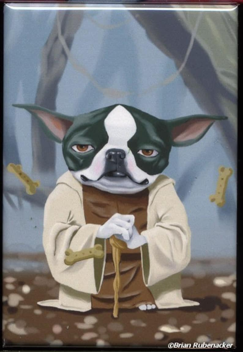 Yoda Terrier  Boston Terrier magnet boston terrier gift image 0