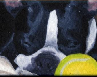 Boston terrier sleeping with a ball cute dog art magnet