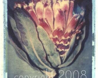 Polaroid transfer Coreys Flower