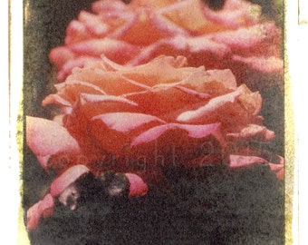 Polaroid transfer - Rose