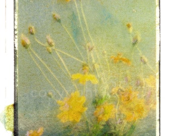 Polaroid transfer - Cut spring flowers