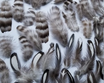 Chicken Feathers 60 Assorted Black and White Naturally Molted (E)