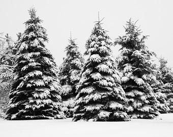 Winter Trees Landscape Photography Extra Large Art Print Snow Photograph Black And White Nature Photo Modern Farmhouse Wall Decor