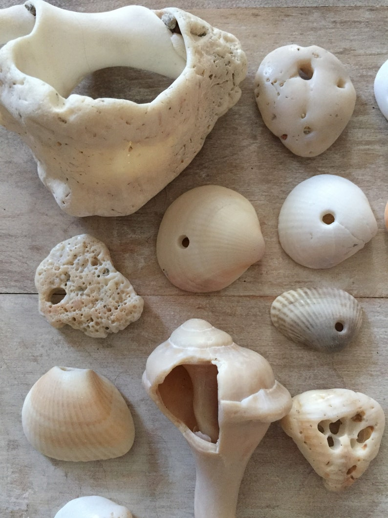 shards with natural holes,valentine gift wrap souvenir,good fortune,mobile making,jewelry supplies,tropical BEACH FINDS...30 shells