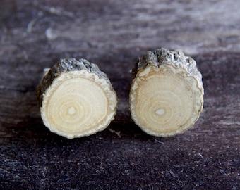 Delicate Holly Rustic Twig Miniature Wooden Stud Earrings by Tanja Sova