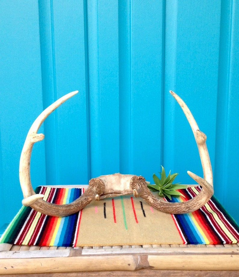SALE-FREE SHIPPING-Vintage Real Deer Antler Rack-8 Point Whitetail Deer Antler Rack wSkull Bone-Farmhouse-Rustic Holiday Decor-Art Project