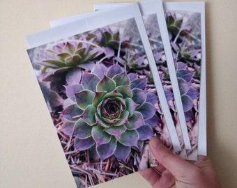 Notecards - Natural Treasures - Botanica 1 - Hens and Chicks