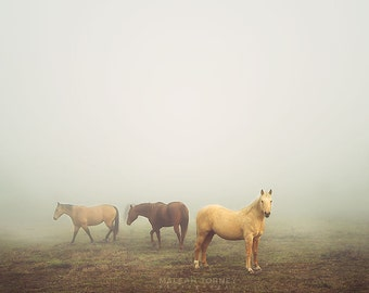 Horse Photography, Brown Horse Photo, Quarter Horses In Foggy Field, Horse Wall Art, Equine Art, Fine Art Photography, Horse Nursery