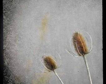 Thistle Nature Photography, Modern and Minimal Wall Art, Black, Gray and Brown