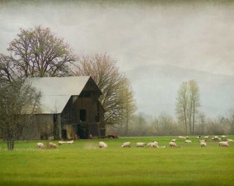 Sheep Farm, Old Barn Photography, Country Decor, Sheep Art Photo, Farm Wall Art, Fog, Oregon, Farmhouse Decor, Sheep Picture, Oregon