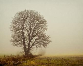 Oak Tree Photography, Fall Wall Art, Fall Decor, Rustic Wall Art, Fog, Sepia Oak Tree Photo