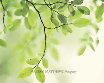 Green Tree Leaves Photograph - dreamy woodland home decor photo, peaceful art