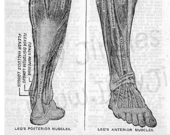 Vintage Anatomical Foot and Leg Etchings - Greyscale Collage Sheet Digital Download for Halloween Crafting and Decor