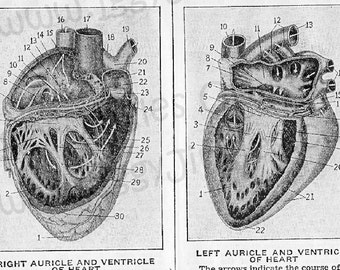 Vintage Anatomical Heart Etchings - Greyscale Collage Sheet Digital Download for Halloween Crafting and Decor