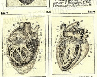 Vintage Anatomical Hearts Sepia Toned Collage Sheets for Halloween crafts and decor