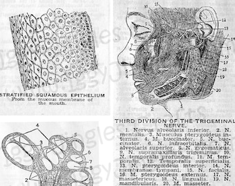 Vintage Anatomical Cells and Nerves Etchings - Greyscale Collage Sheet Digital Download for Halloween Crafting and Decor