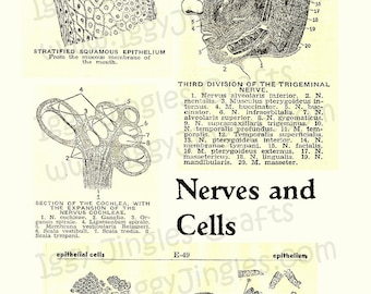 Vintage Image Cells and Nerves Collage Sheet Sepia Tone Digital Download for Halloween Crafting and Decor