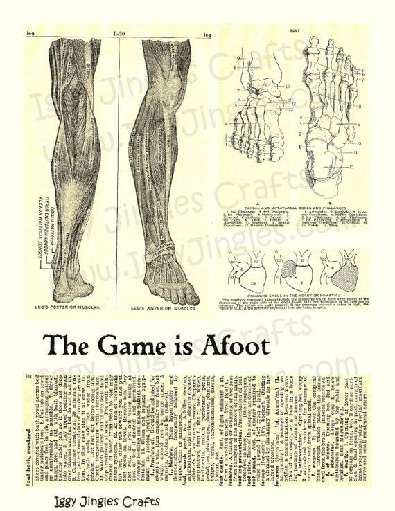 Vintage imagen anatómica pies huesos y músculos, tono Sepia Collage ...