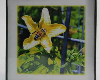 Visitors To The Garden Mini Framed Photos - set of three